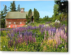 Wildflowers And Red Barn Acrylic Print by Roupen  Baker