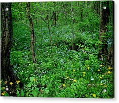 Wildflowers And Woods Acrylic Print by Martin Morehead