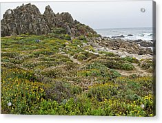 Wildflowers At China Rock - Pebble Beach - California Acrylic Print by Brendan Reals