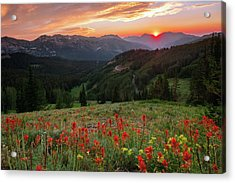 Wildflowers At Gaurdsmans Pass Acrylic Print