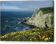 Wildflowers At Pt. Reyes Acrylic Print