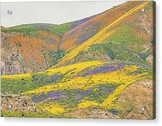 Acrylic Print featuring the photograph Wildflowers At The Summit by Marc Crumpler