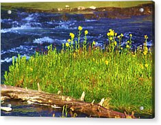 Wildflowers By The River Acrylic Print by Russell  Barton