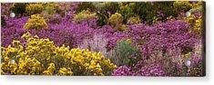 Wildflowers El Prado Nm Acrylic Print