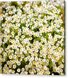 Acrylic Print featuring the photograph Wildflowers by Holly Kempe