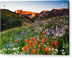 Wildflowers In Albion Basin. Acrylic Print