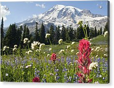 Wildflowers In Mount Rainier National Acrylic Print by Dan Sherwood