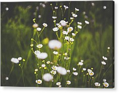 Acrylic Print featuring the photograph Wildflowers In Summer by Shelby Young