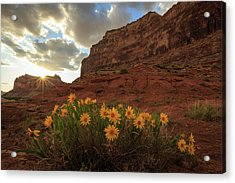 Wildflowers In The Swell. Acrylic Print