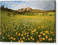 Wildflowers Acrylic Print by Lightvision