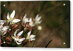 Wildflowers Acrylic Print by Marna Edwards Flavell