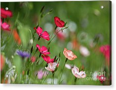 Acrylic Print featuring the photograph Wildflowers Meadow by Eva Lechner