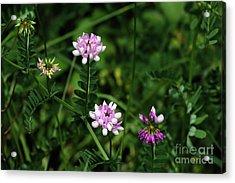 Wildflowers Northford Acrylic Print