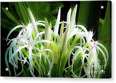 Acrylic Print featuring the photograph Wildflowers Of Hawaii by D Davila