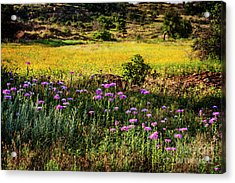 Wildflowers Of The Wichita Mountains Acrylic Print by Tamyra Ayles