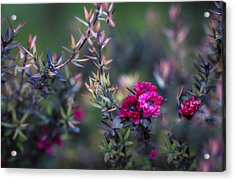 Wildflowers On A Cloudy Day Acrylic Print by Jade Moon