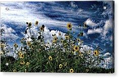 Wildflowers On The Brazos Acrylic Print