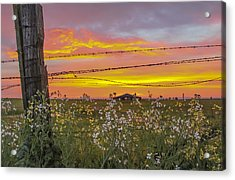 Wildflowers On The Ranch Acrylic Print