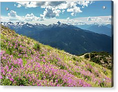 Acrylic Print featuring the photograph Wildflowers On Whistler Mountain by Pierre Leclerc Photography