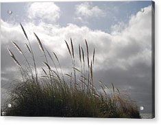 Wildgrass Acrylic Print by Jean Booth
