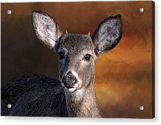 Wildlife - Button Buck - Deer Acrylic Print by SharaLee Art