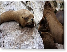 Wildlife Of The Ballestas Islands Acrylic Print by Aidan Moran