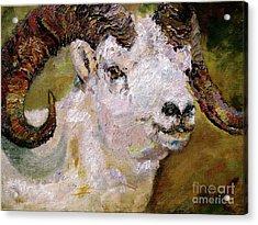 Wildlife Portrait Dall Sheep Ram Acrylic Print