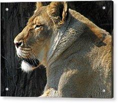 Wildlife Series Acrylic Print by Ginger Geftakys