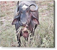 Wilds Of Buffalo Acrylic Print