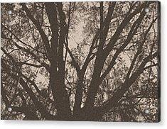 Wilds Of Myakka 005 Acrylic Print