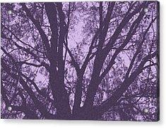 Wilds Of Myakka 006 Acrylic Print