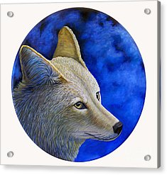 Wiley Coyote Acrylic Print by Brian  Commerford