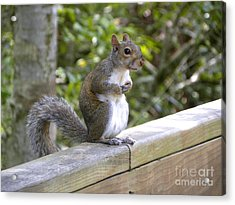 Will Pose For Peanuts Acrylic Print by Terri Mills