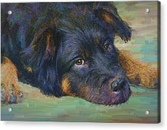 Will You Play With Me? Acrylic Print by Angela A Stanton