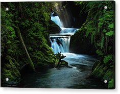 Acrylic Print featuring the photograph Lush Willaby  by Expressive Landscapes Fine Art Photography by Thom