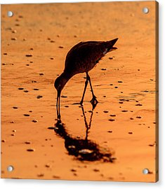Acrylic Print featuring the photograph Willet On Sunrise Surf by Steven Sparks