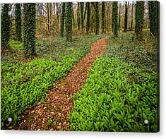 William Butler Yeats Woods Of Coole Park Acrylic Print