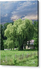 Willow Acrylic Print by Alan Del Vecchio