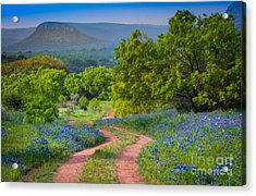 Willow City Road Acrylic Print by Inge Johnsson