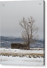 Willow Creek Cabin Acrylic Print
