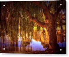 Willow Glow Acrylic Print