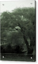 Willow Green Acrylic Print by Debra     Vatalaro