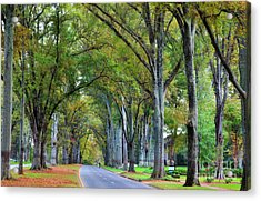 Willow Oak Trees Acrylic Print