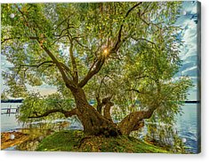 Willow Tree - Lake Geneva Wisconsin Acrylic Print
