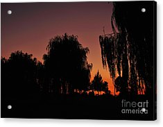 Willow Tree Silhouettes Acrylic Print by Joe  Ng