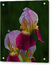 Willowwood Iris Acrylic Print