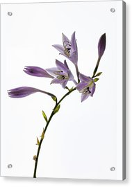 Acrylic Print featuring the photograph Willowy Whispers by Mike Lang