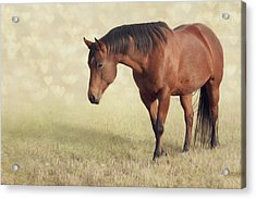 Wilma Acrylic Print by Debby Herold