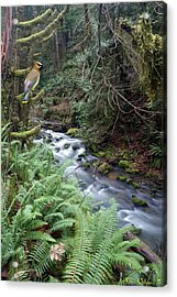 Acrylic Print featuring the photograph Wilson Creek #14 With Added Cedar Waxwing by Ben Upham III