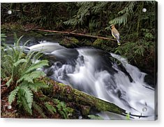 Acrylic Print featuring the photograph Wilson Creek #18 With Added Cedar Waxwing by Ben Upham III